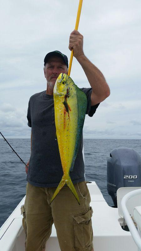 Mahi Fishing In Panama City Beach Fl